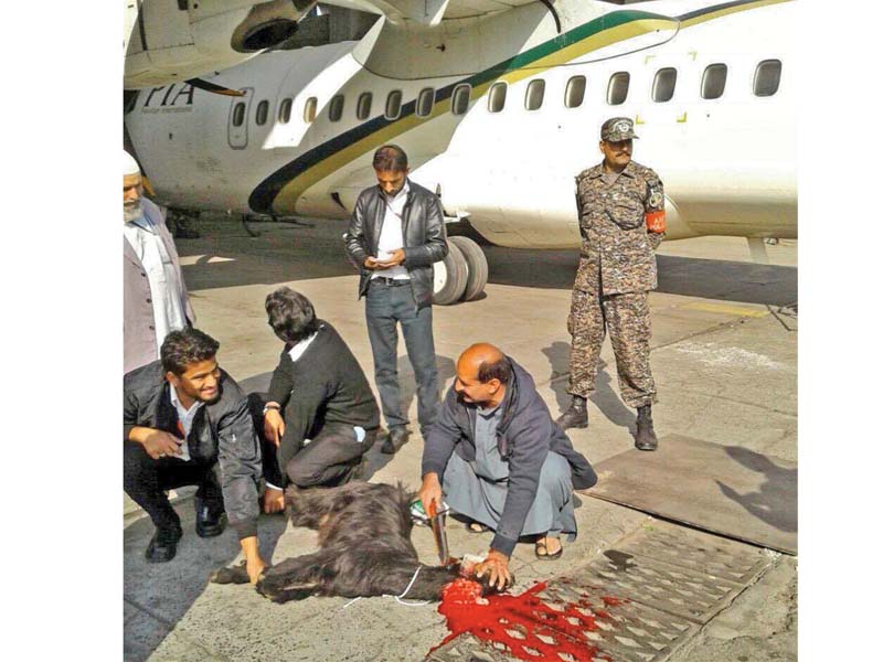 A goat being slaughtered before an ATR flight. PHOTO: INP