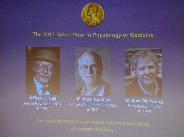Winners of the 2017 Nobel Prize in Physiology or Medicine (left to right) Jeffrey C. Hall, Michael Rosbash and Michael W. Young are pictured on a display during a press conference at the Karolinska Institute in Stockholm. PHOTO: AFP