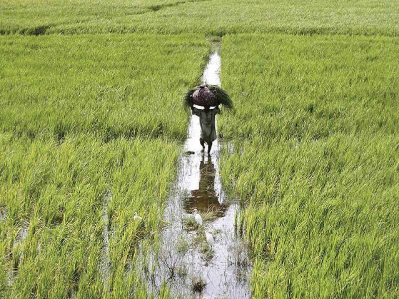With drip irrigation, the farmers can save 60% of electricity and diesel costs. PHOTO: REUTERS