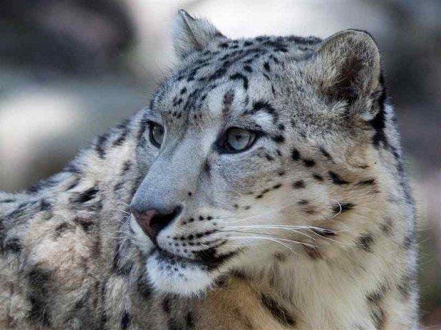 PHOTO COURTESY: ANIMAL.SHOW TELLYOU