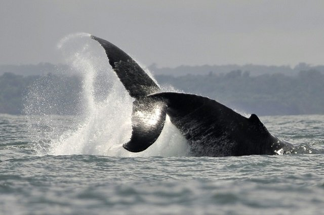 On current trends, climate change by century's end will empty the oceans of nearly a fifth of all living creatures, measured by sheer weight. PHOTO: AFP