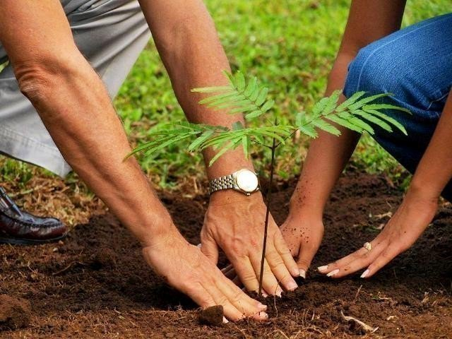 Thousands of trees planted in both cities in special afforestation ceremonies. PHOTO: FILE