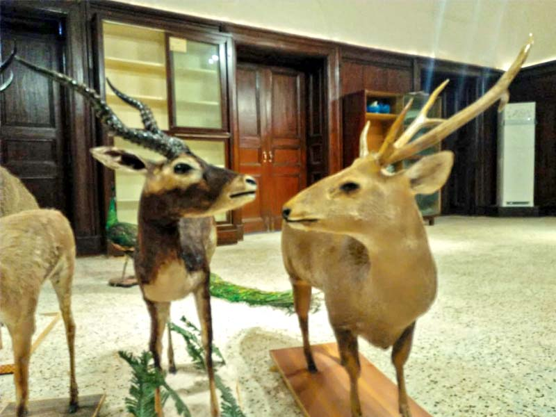 The museum will have around 300 specimen of birds and 30 of reptiles. Owing to its geographical location, Sindh is home to a number of bird species, according to wildlife officials. PHOTOS: EXPRESS