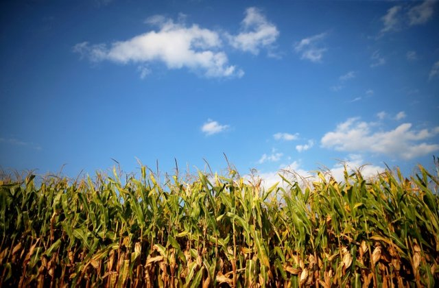 A Reuters file photo of an agricultural field.