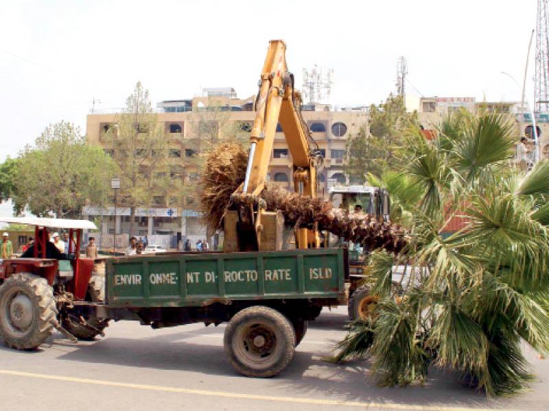 Palm tree. PHOTO: FILE