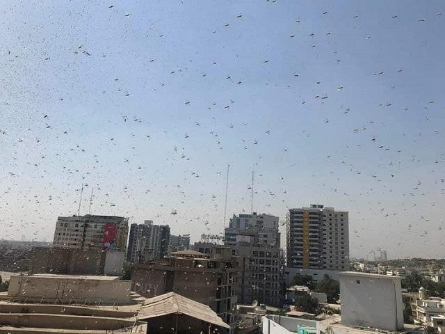 People post footage of Tiddi Dal filling the metropolis' skies . PHOTO: EXPRESS