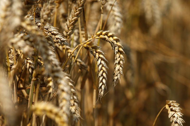 New wheat support price to add Rs3b to farmers' kitty | The Express Tribune