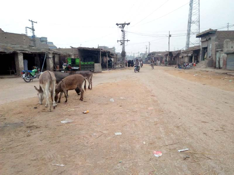 The streets of Rato Dero, in the heart of Bilawal Bhutto Zardari's constituency in Larkana, are unpaved, with encroachments and livestock posing obstacles for vehicles. PHOTO: EXPRESS