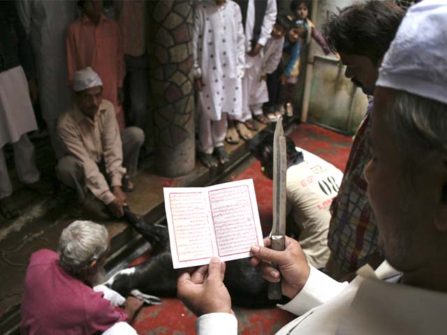 Muslims offer prayers before sacrificing a goat on Eidul Azha in Allahabad, India, December 9, 2008. PHOTO: AP