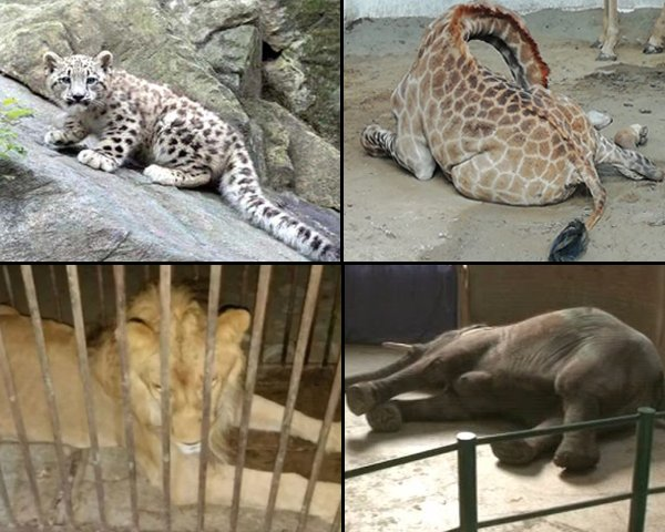 If Pakistani zoos lack the funding to provide basic necessities to animals, then there is no purpose to have them at all.