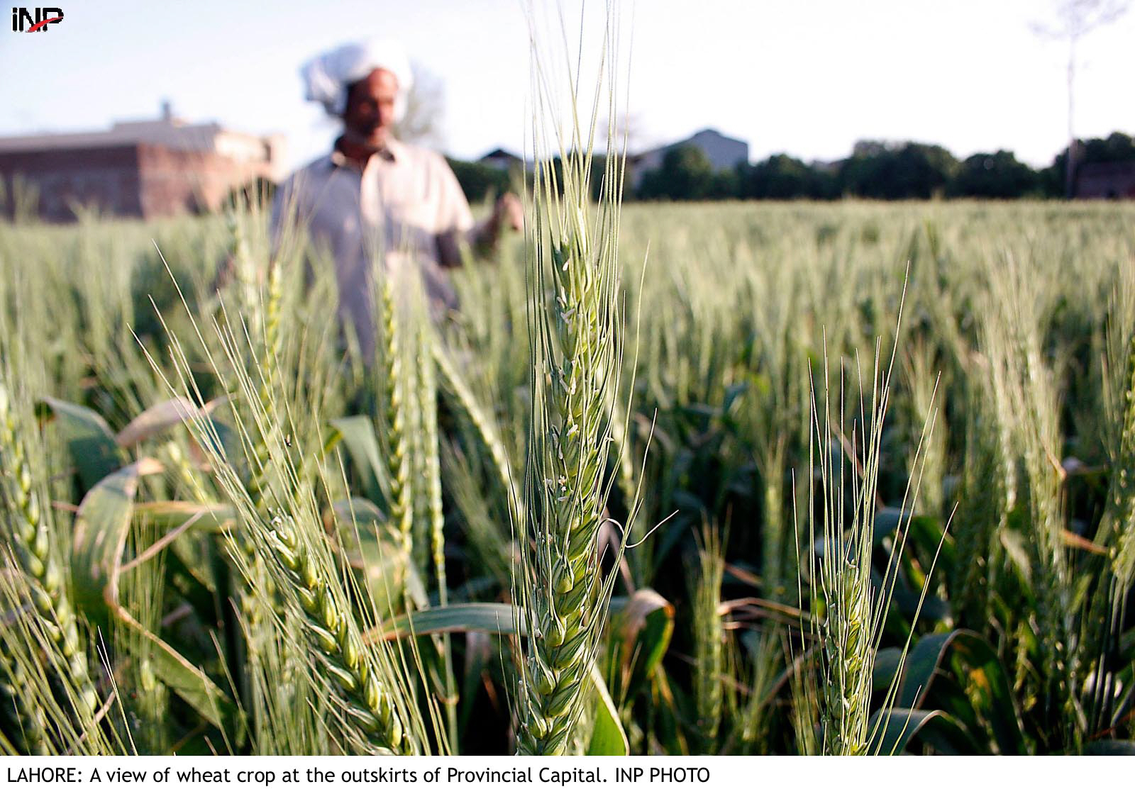 The representatives of the Kisaan Ittehad, Badin, urged upon the chief minister and the 'honest' officials of the irrigation department to take action against officials and influential landlords who are blocking water supply to the tail-end channels. PHOTO: INP