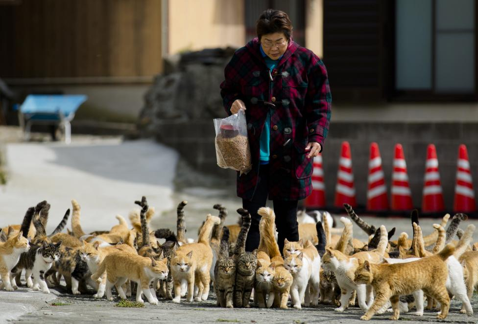 Originally introduced to deal with mice that plagued fishermen's boats, the cats stayed on and multiplied. PHOTO: REUTERS